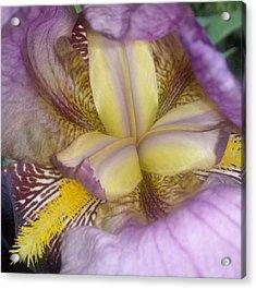 Inside The Iris Acrylic Print
