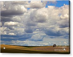 Insignificant Acrylic Print