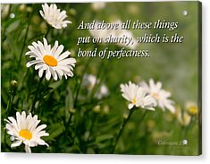 Inspirational - Daisy - Colossians 3-14 Acrylic Print by Mike Savad