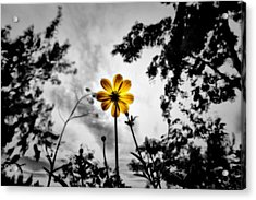 Inspire Acrylic Print by Suradej Chuephanich