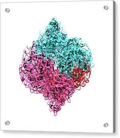 Insulin Molecule Acrylic Print by Animate4.com/science Photo Libary