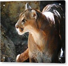 Intense Mountain Lion Acrylic Print by DiDi Higginbotham