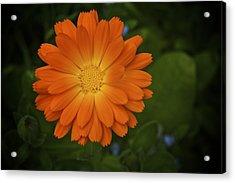 Intense Orange Acrylic Print by Terry Horstman