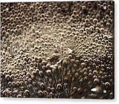 Interaction Acrylic Print by David Pantuso