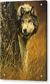 Interested Acrylic Print by Lucie Bilodeau
