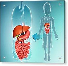 Internal Organs Of A Child Acrylic Print