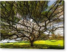 Intertwined Acrylic Print by Chuck Jason