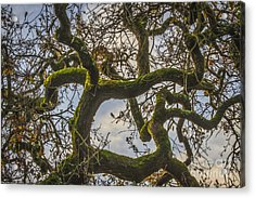 Intertwined Acrylic Print by Mitch Shindelbower