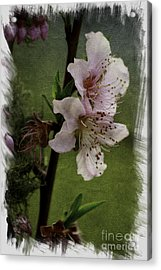 Acrylic Print featuring the photograph Into Spring Abstract by Lori Mellen-Pagliaro