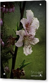 Acrylic Print featuring the photograph Into Spring by Lori Mellen-Pagliaro