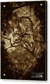 Into The Dark Wood Acrylic Print