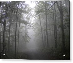 Acrylic Print featuring the photograph Into The Light by Diannah Lynch
