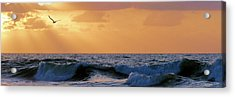 Into The Light Acrylic Print by JC Findley