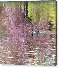 Into The Pink Acrylic Print by Karin Ubeleis-Jones
