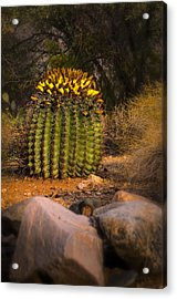 Acrylic Print featuring the photograph Into The Prickly Barrel by Mark Myhaver
