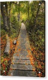 Into The Woods - Retzer Nature Center - Waukesha Wisconsin Acrylic Print by Jennifer Rondinelli Reilly - Fine Art Photography