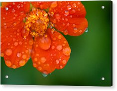 Invigorating Acrylic Print by Matt Dobson