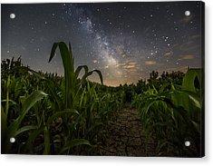 Iowa Corn Acrylic Print