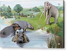 Ipswichian Interglacial Mammals Acrylic Print by Natural History Museum, London/science Photo Library