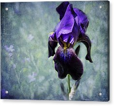 Iris - Purple And Blue - Flowers Acrylic Print
