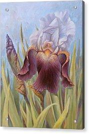 Iris 1 Acrylic Print