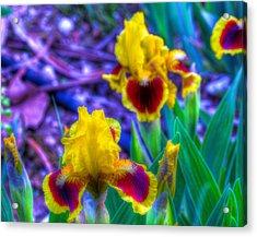 Iris #58 Acrylic Print by John Derby