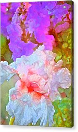 Iris 60 Acrylic Print by Pamela Cooper