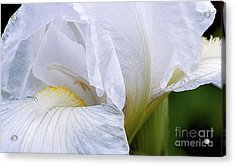 Iris Abstract Acrylic Print by Ron Roberts