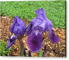 Acrylic Print featuring the photograph Iris After Rain by Katie Wing Vigil