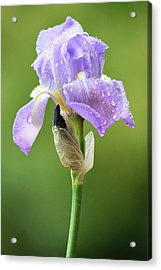 Acrylic Print featuring the photograph Iris After The Rain by Trina  Ansel