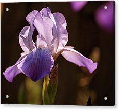 Iris Aglow Acrylic Print by Rona Black
