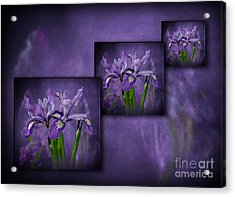 Iris Art Acrylic Print by Shirley Mangini