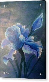 Iris Blue Acrylic Print by Kay Novy