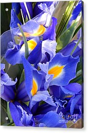 Iris Blues In New Orleans Louisiana Acrylic Print by Michael Hoard