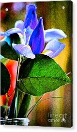 Iris Carried Away Acrylic Print by Gwyn Newcombe