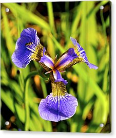 Acrylic Print featuring the photograph Iris by Cathy Mahnke