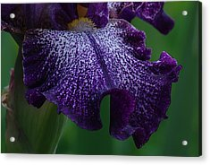 Acrylic Print featuring the photograph Iris Closeup by Ken Dietz