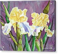 Iris Cream Duo Acrylic Print by Kathryn Duncan