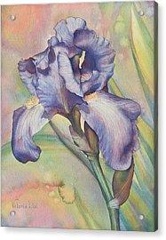 Iris Dreaming Acrylic Print