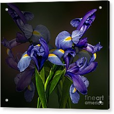Acrylic Print featuring the photograph Iris Fantasy by Shirley Mangini