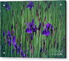 Iris Field Acrylic Print by Yumi Johnson