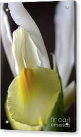 Acrylic Print featuring the photograph Iris Flower by Joy Watson