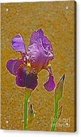 Iris Flower Acrylic Print by Nur Roy