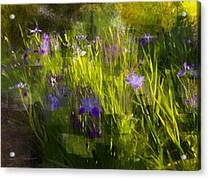 Acrylic Print featuring the photograph Iris Garden  by Linde Townsend