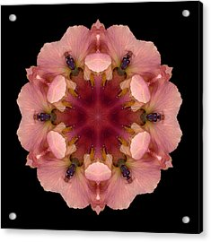 Acrylic Print featuring the photograph Iris Germanica Flower Mandala by David J Bookbinder