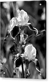 Iris In Black And White Acrylic Print by Karon Melillo DeVega