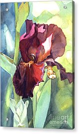 Watercolor Of A Tall Bearded Iris Called Sultan's Palace In Red And Burgundy Acrylic Print