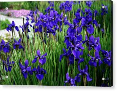 Acrylic Print featuring the photograph Iris In The Field by Kay Novy