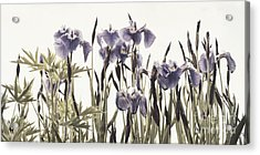Iris In The Park Acrylic Print by Priska Wettstein