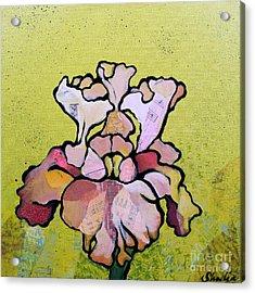 Iris Iv Acrylic Print by Shadia Derbyshire